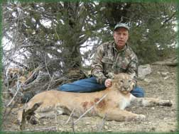 guided mountain lion - cougar hunts in Colorado