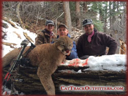 Colorado mountain lion archery hunts - record book tom cats