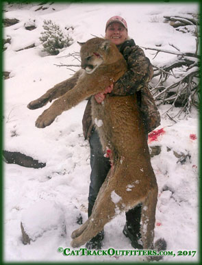record book toms- Colorado mountain lion hunting