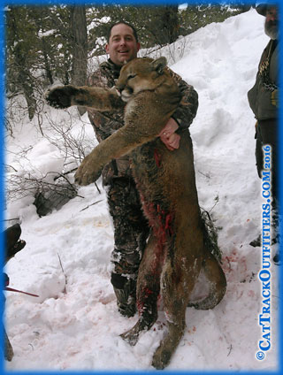 Pope & Young mountain lion - Rob Upchurch hunting with Cat Track Outfitters