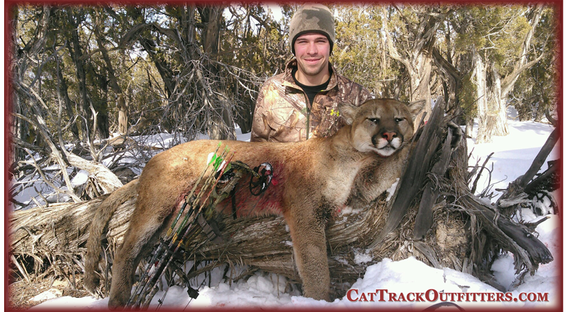 Colorado Cougar Hunting - Bing images