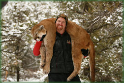 guided cougar mountain lion hunting trips