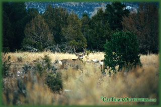 guided mule deer hunts in Colorado with Cat Track guides and outfitters