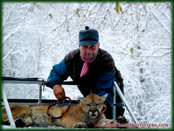 big game hunting guides and outfitters, Cody & Fred Wallace - mountain lion hunting in Western Colorado
