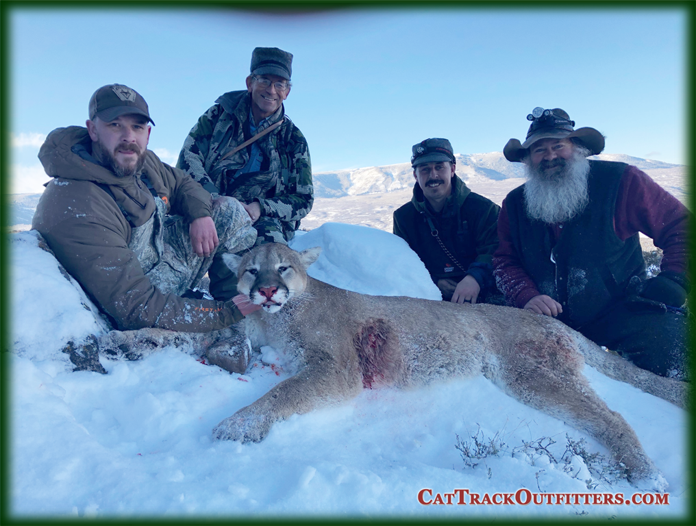 Cat Track Outfitters - guided mountain lion hunting in