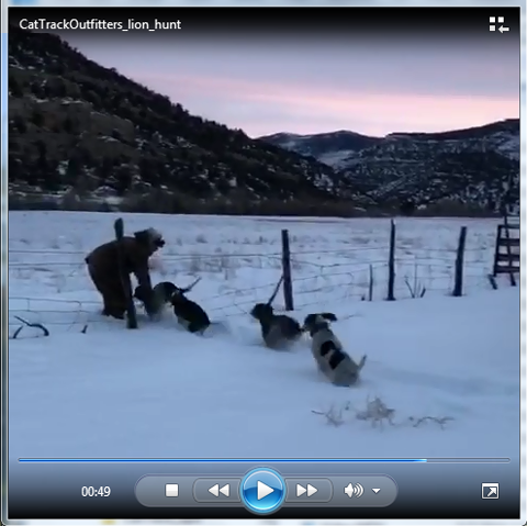 Click to view mountain lion hunting video