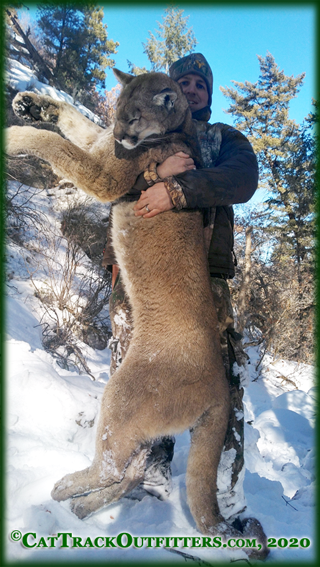Mountain Lion Hunts in Colorado
